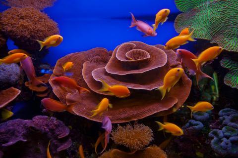 israel_coral_reef_-_eilat.jpg