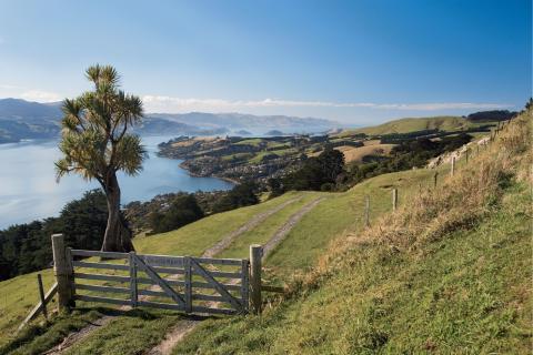 newzealand_dunedin_1.jpg