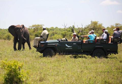 sudur_afrika_ngala_safari_lodge_4.jpg